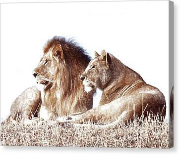 Panther Canvas Print - Lioness And Lion by Anna J Davis