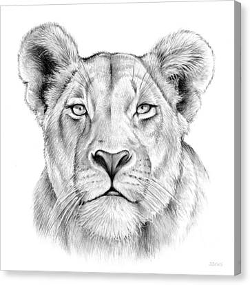 Lioness Canvas Print by Greg Joens