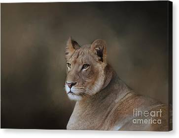 Kathy Rinker Canvas Print - Lioness by Kathleen Rinker