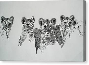 Lionesses  Canvas Print by Ryan Seate