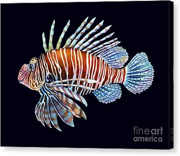 Lionfish In Black Canvas Print by Hailey E Herrera