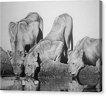 Lions Drinking Canvas Print by Rita Niblock