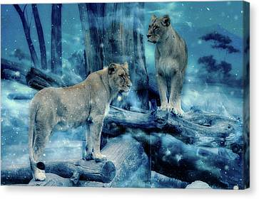 Lioness Canvas Print - Lions Of The Mist by Mountain Dreams