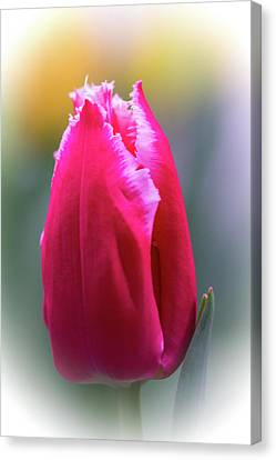 Lipstick Pink Tulip With Fringe Canvas Print by Mother Nature