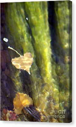 Liquid Leaves 1 Canvas Print