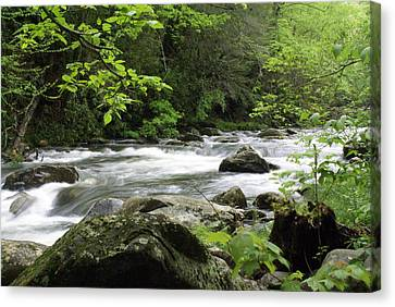 Litltle River 1 Canvas Print