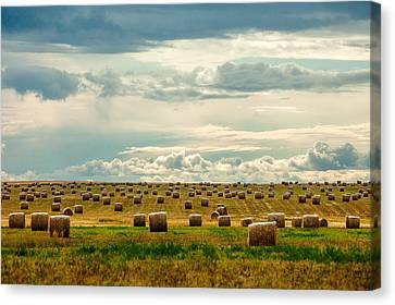 Littered With Bales Canvas Print
