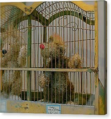Little Bears Canvas Print by Louise Fahy