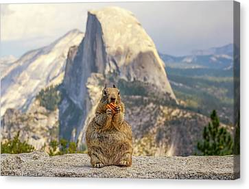 Little, Big Squirrel Canvas Print by Joseph S Giacalone