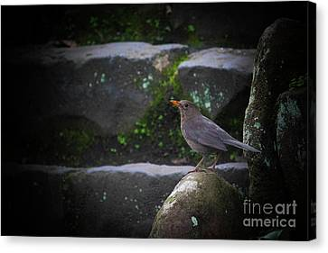 Little Bird On The Rock Canvas Print