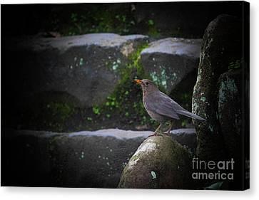 Little Bird On The Rock Canvas Print