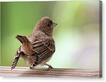 Canvas Print featuring the photograph Little Bird by Trina Ansel
