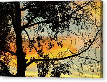 Canvas Print featuring the photograph Little Birdie Told Me So by James BO Insogna