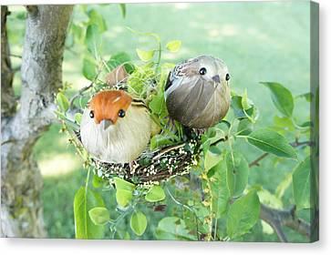 Little Birds 4 Canvas Print