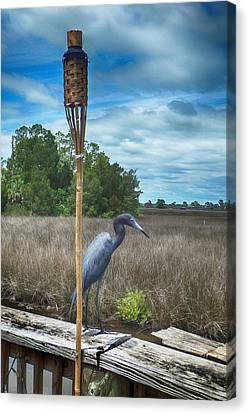 Little Blue Heron Canvas Print by Judy Hall-Folde