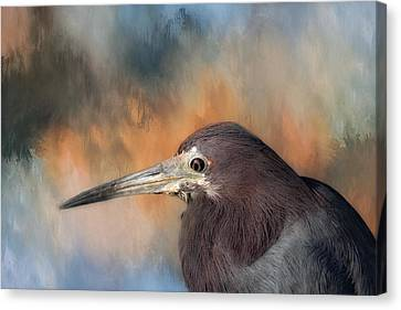 Sea Birds Canvas Print - Little Blue Heron by Kim Hojnacki