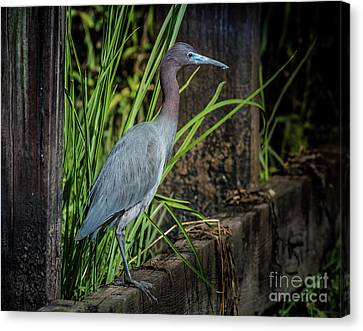 Canvas Print featuring the photograph Little Blue Under Bridge by Robert Frederick