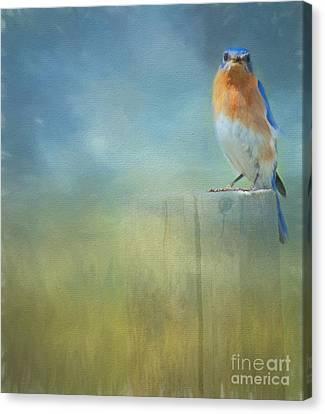 Kathy Rinker Canvas Print - Little Bluebird by Kathleen Rinker