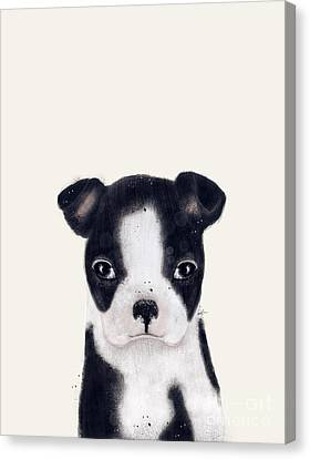 Canvas Print featuring the painting Little Boston Terrier by Bri B