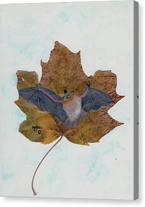 Little Brown Bat Canvas Print