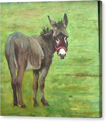 Little Burro Canvas Print by John Reynolds