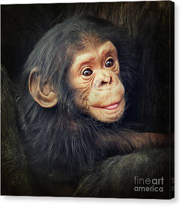 Little Chimpanzee Canvas Print by Angela Doelling AD DESIGN Photo and PhotoArt