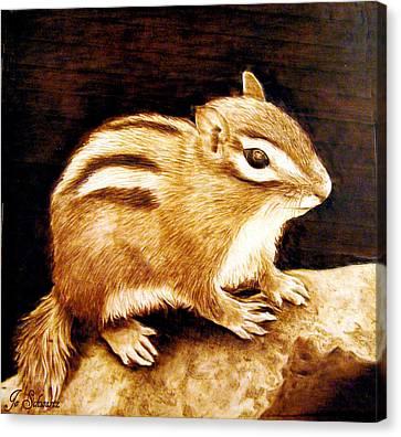 Little Chipper Canvas Print by Jo Schwartz