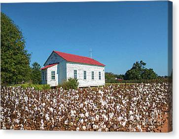Little Church In The Cotton Field Canvas Print by Bonnie Barry