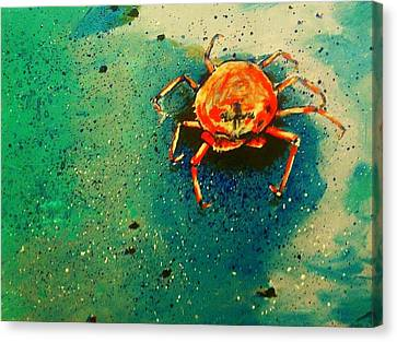 Little Crab Canvas Print by Heather  Gillmer