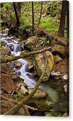 Canvas Print featuring the photograph Little Creek by Gary Brandes