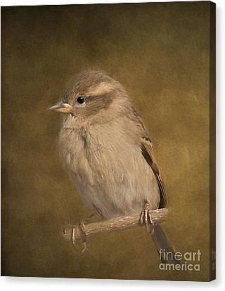 Kathy Rinker Canvas Print - Little Cutie by Kathleen Rinker