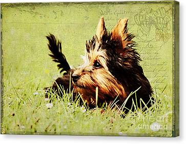 Little Dog Canvas Print by Angela Doelling AD DESIGN Photo and PhotoArt