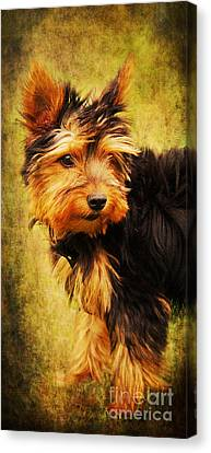 Little Dog II Canvas Print by Angela Doelling AD DESIGN Photo and PhotoArt