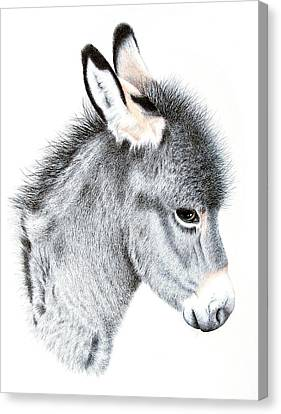 Little Donkey Canvas Print by Sandra Moore