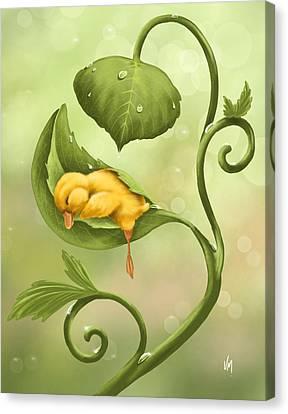 Little Duck Canvas Print by Veronica Minozzi