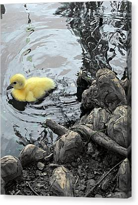Little Ducky 2 Canvas Print by Angelina Vick