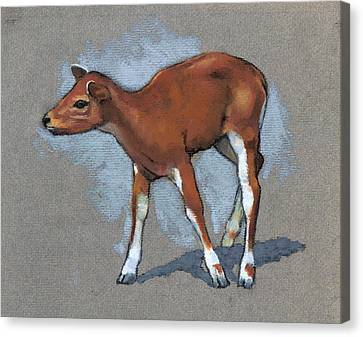 Little Fawn Animal In Pastel Canvas Print by Joyce Geleynse