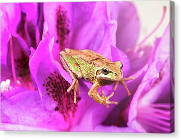Little Frog Inside Of Wild Flowers During Bright Daylight  Canvas Print