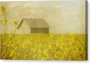 Little House On The Prairie Canvas Print by Rebecca Cozart