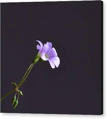 Little Lavender Flowers Canvas Print