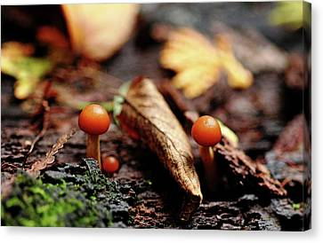 Little Life In The Forest Canvas Print