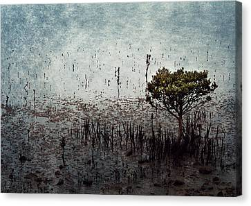Little Mangrove Canvas Print