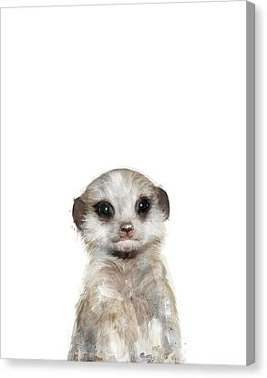 Little Meerkat Canvas Print by Amy Hamilton