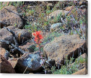 Little Orange Wild Flower Canvas Print by Debbie Wells