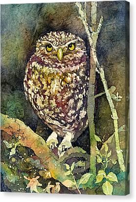Little Owl Canvas Print by Hailey E Herrera