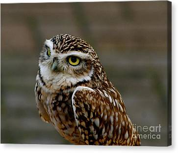 Canvas Print featuring the photograph Little Owl by Louise Fahy