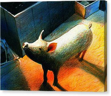 Little Pig Canvas Print