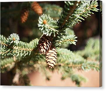 Little Pine Cones Canvas Print by James Granberry