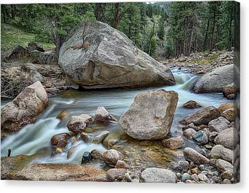 Canvas Print featuring the photograph Little Pine Tree Stream View by James BO Insogna