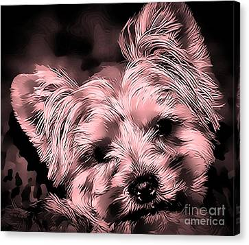 Canvas Print featuring the photograph Little Powder Puff by Kathy Tarochione